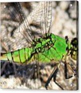 Green Dragonfly Closeup Acrylic Print