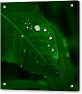 Green Leaf With Raindrops Acrylic Print