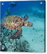 Green Sea Turtles  Acrylic Print by Dave Fleetham - Printscapes