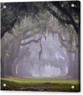 Greenwood's Oak Alley Acrylic Print