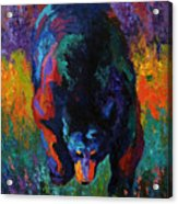 Grounded - Black Bear Acrylic Print