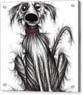 Grumpy Dog Acrylic Print