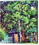 Hackberry Tree Acrylic Print