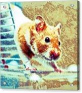 Hamster Acrylic Print