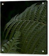 Hapuu Pulu Hawaiian Tree Fern  Acrylic Print