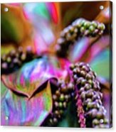 Hawaii Plants And Flowers Acrylic Print