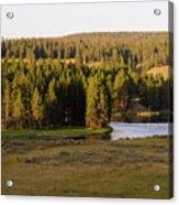 Hayden Valley 2 Acrylic Print