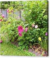 Hibiscus In The Garden Acrylic Print