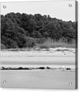 Hilton Head Island Shoreline In Black And White Acrylic Print