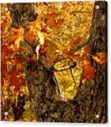 Hometown Series - Deep In The Woods Acrylic Print
