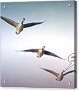 Honk If You Love Flying Acrylic Print