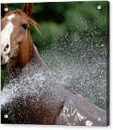Horse Bath II Acrylic Print