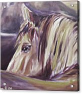 Horse World Detail Acrylic Print