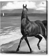 Horses In Paradise  Dance Acrylic Print