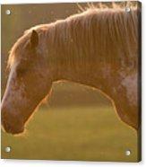 Horses In The Evening Light Acrylic Print
