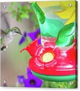 Hummingbird Found In Wild Nature On Sunny Day Acrylic Print
