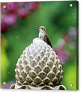 Hummingbird On Garden Water Fountain Acrylic Print