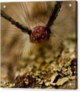 Hungry Caterpillar Acrylic Print