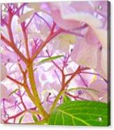 Hydrangeas Flowers Art Prints Hydrangea Art Giclee Baslee Troutman Acrylic Print