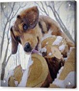 Iced-lolly Acrylic Print