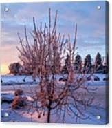 Icy Tree At Sunset  Acrylic Print
