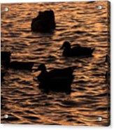 In The Liquid Gold Acrylic Print