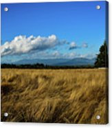 Into The Grasslands. Acrylic Print