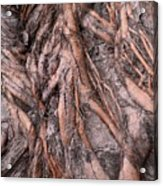Intricate Root System Acrylic Print