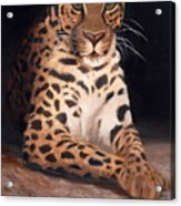 Intrigued Acrylic Print