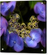 Iridescent Blue Acrylic Print