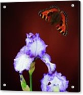 Iris And Butterfly Acrylic Print