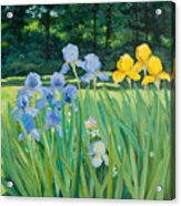 Irises In The Garden Acrylic Print