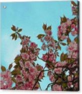 Irish Spring Acrylic Print