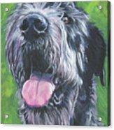 Irish Wolfhound Acrylic Print