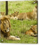 It's All About Family Acrylic Print
