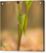 Jack In The Pulpit Acrylic Print