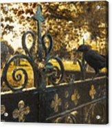 Jackdaw On Church Gates Acrylic Print by Amanda Elwell
