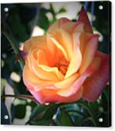 Jacob's Rose Acrylic Print