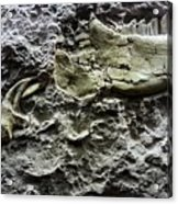 Jaw Bone Acrylic Print