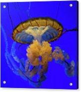Jellyfish At California Academy Of Sciences In San Francisco, California Acrylic Print