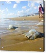 Jellyfish On The Beach  Acrylic Print