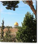 Jerusalem Trees Acrylic Print