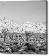 Joshua Tree Panoramic Acrylic Print