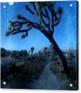 Joshua Trees At Night Acrylic Print