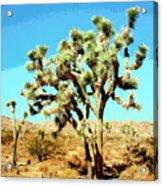 Joshua Trees Acrylic Print