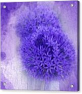 Just A Lilac Dream -4- Acrylic Print by Issabild -