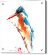 Kingfisher Bird Acrylic Print