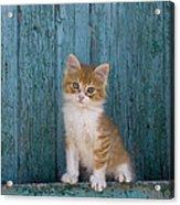 Kitten On A Greek Island Acrylic Print