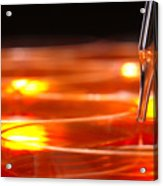 Laboratory Petri Dishes In Science Research Lab Acrylic Print