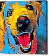 Labrador Retriever 2 Acrylic Print